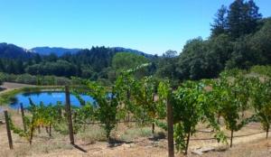Pride Vineyards